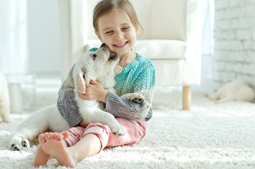 A young girl plays with a puppy on a white carpet